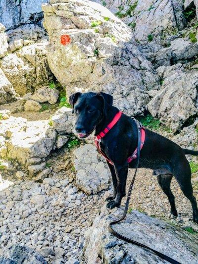 Bergtour mit Hund