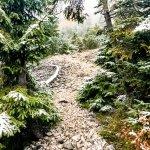 Der steile Weg durch den Wald