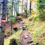 Durch den Wald zum Guffert